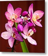 Ground Orchid Metal Print
