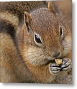 Ground Squirrel Metal Print