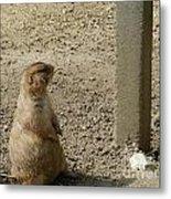 Groundhog With Shadow Metal Print