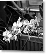 Group Of Flowers Metal Print