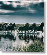 Group Of Horses Crossing A River Metal Print