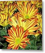 Grouping Of Gerbera Metal Print