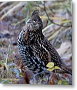 Grouse Metal Print