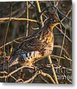 Grouse In A Tree Metal Print