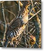 Grouse In An Apple Tree Metal Print