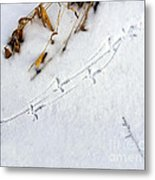Grouse Tracks Metal Print