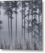 Growing In The Fog Metal Print