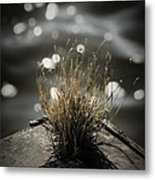 Growing Out Of Nothing Metal Print