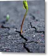 Growing Plant Metal Print