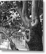 Growth On The Survivor Tree In Black And White Metal Print