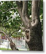 Growth On The Survivor Tree Metal Print