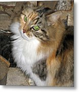 Grumpy Kitty With Emerald Eyes Metal Print