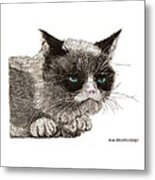 Grumpy Pussy Cat Metal Print by Jack Pumphrey
