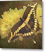 Grunge Giant Swallowtail-1 Metal Print