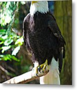 Guarding Liberty Metal Print