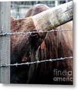 Guarding The Fence V2 Metal Print