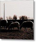 Guarding The Sheep Metal Print