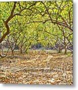 Guava Garden In Autumn Metal Print