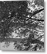 Guggenheim And Trees In Black And White Metal Print