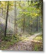 Guided Trail Metal Print