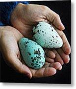 Guillemot Egg Metal Print
