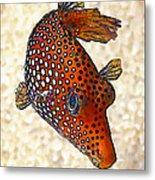 Guinea Fowl Puffer Fish Metal Print