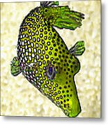 Guinea Fowl Puffer Fish In Green Metal Print