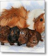 Guinea Pig Family Metal Print