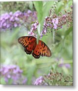 Gulf Fritillary Agraulis Vanillae-featured In Nature Photography-wildlife-newbies-comf Art Groups  Metal Print