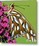 Gulf Fritillary Butterfly Agraulis Metal Print