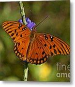 Gulf Fritillary Butterfly Metal Print