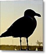 Gull At Sunset Metal Print