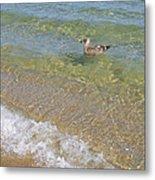 Gull Floating Metal Print
