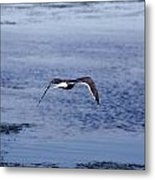 Gull Flying Over Water Metal Print