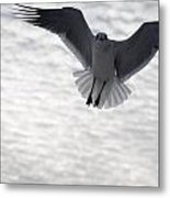 Gull From The Heavens Metal Print
