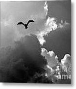 Gull In Flight Mb059bw Metal Print