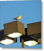 Gull On Guard Metal Print