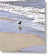Gull On The Shore Metal Print