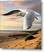 Gull On The Wing Over Beach Landscape Metal Print
