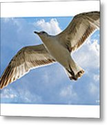 Gull - Out Of Bounds Metal Print