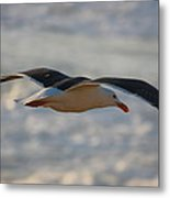 Gull Over The Bay Metal Print