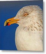 Gull Portrait Metal Print