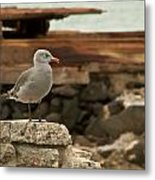 Gull Wall Metal Print by Robert Bascelli