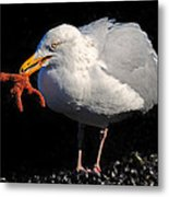 Gull With Starfish Metal Print