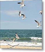 Gulls A Dance'n Metal Print