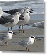 Gulls And Terns Metal Print