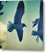 Gulls Metal Print