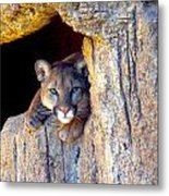 Guardian Of The Cliff Metal Print