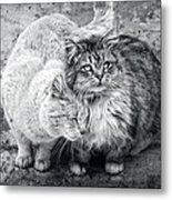 Gutter Kitties Nine Metal Print