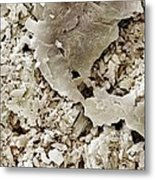 Gypsum Crystals Sem Metal Print by Science Photo Library